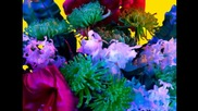 Torkil Gudnason - Electric Blossom...вълшебният свят на цветовете...(music Ernesto Cortazar)...
