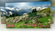 Планински цветя ...