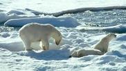 To the Arctic (2012) - Polar Family featurette