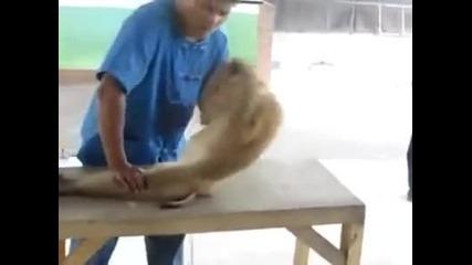 Маймунка прави лицеви опори и коремни преси!