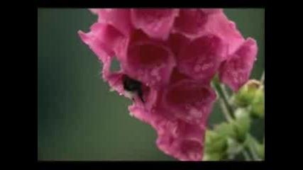 Armin Van Buuren & Elles De Graaf -The Sound Of Goodbye