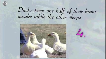 10 любопитни факта за съня