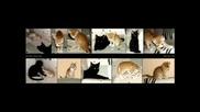 Най-готините i sladki -кучета,котки и други смешни неща