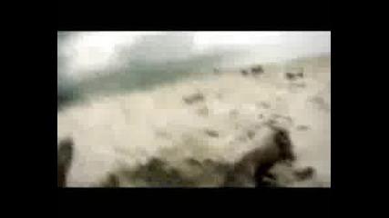Survivor 3 Островът На Перлите