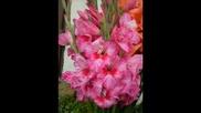 Музика за душата - Валса на цветята, Пьотр Чайковски