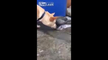 Куче се опитва да помогне на риби извън водата !