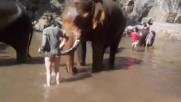 Реакцията на слон ,когато не харесва туристка да го къпе