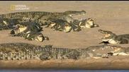 Бг Аудио - Крокодилски банди