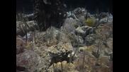някакви риби стоящи вертикално аквариум Пекин 9