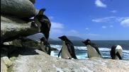 Penguin Fail - Kompilaciia padashti pingvini ..