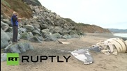 САЩ: Учени смаяни след като още един кит изплува на брега в Калифорния