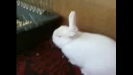 Моя Малък Сладък Заек!!!