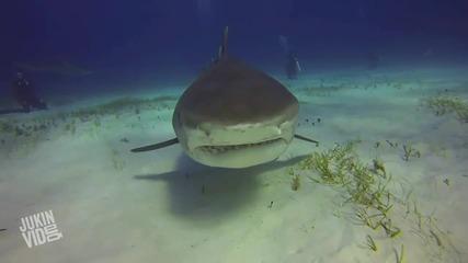 Акула захапва камерата на водолаз ..