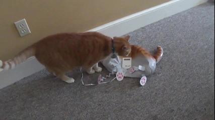 Луда котка боксьор нокаутира врага си