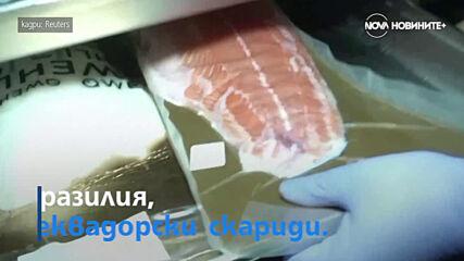 Любител на вълци създава център за рехабилитация в Екатеринбург