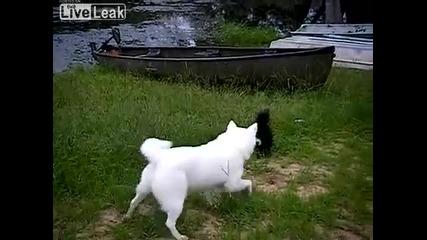 Куче срещу скункс