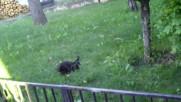 Малки котенца 2