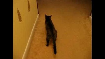 Друсана котка Ahxahxahxhxa