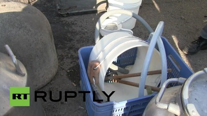 Italy: Protesting farmers blockade dairy corp. with cows, tractors