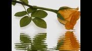 красиви цветя и релаксираща музика