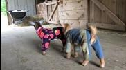 Бебета козленца в Пижами
