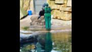Шоу с  тюлен