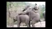 Не яхай разгонен слон * смях *