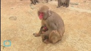 Japanese Zoo Apologizes for Naming a Newborn Monkey After the Royal Baby