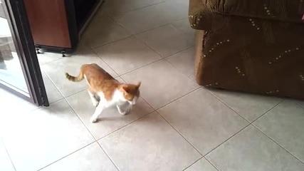 Смях до скъсване!-! Куче и котка се борят!