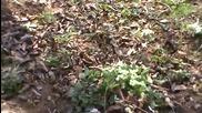 Разцъфте ли се цветя в село Горна Диканя 1