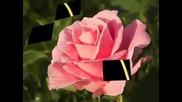 En Rose - relax