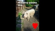 Praseto Gosho !!!