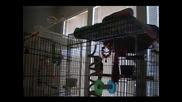 Папагал пее Drownong Pool - Bodies