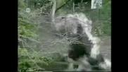Животните срещу Човека - Компилация смях