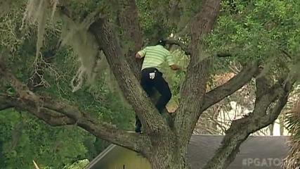 Sergio Garcia Се качва на дърво за да удари топката за голф !