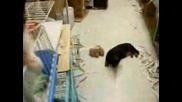Кученце Казва Елмо Супер Смешно Vbox7
