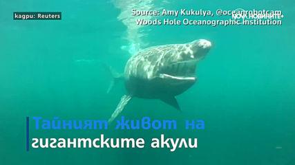 Фестивал на балоните в Бристол и видео на гигантска акула