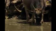 Крокодил Срещу - Антилопи и др
