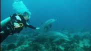 Игриви делфини плуват с гмуркачи в Червено море