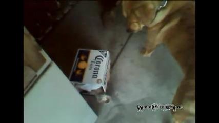 Куче приема и защитава изоставена котка