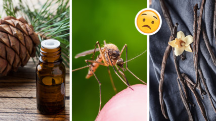 Как да се справим с комарите? 5 природни начина