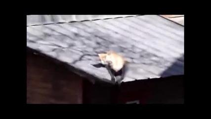 Котки падат от покрив докато се бият!