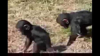 Бутни Другарче...упс Маймунка (смешно)