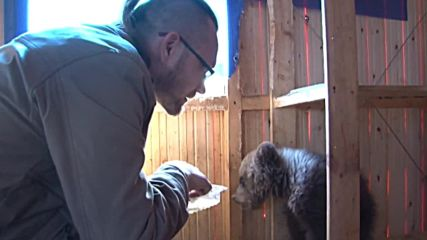 Russia: Orphaned bear cub given home by family