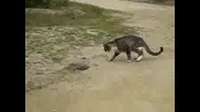 котка хвана змия за обяд
