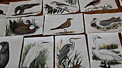 Застрашени видове в паната и рисунките на учениците от Зпг