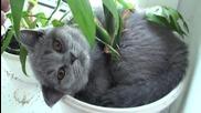 Къде е котето? Случвало ли ви се , като се приберете , да търсите домашния си любимец ? :)
