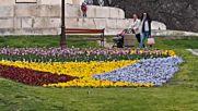 ЦВЕТЕН КИЛИМ: Над 40 000 лалета ще красят Варна