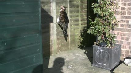 Котка ходи по стената на Забавен каданс