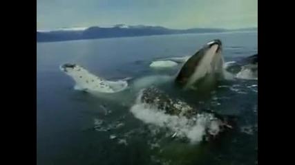 огромен кит